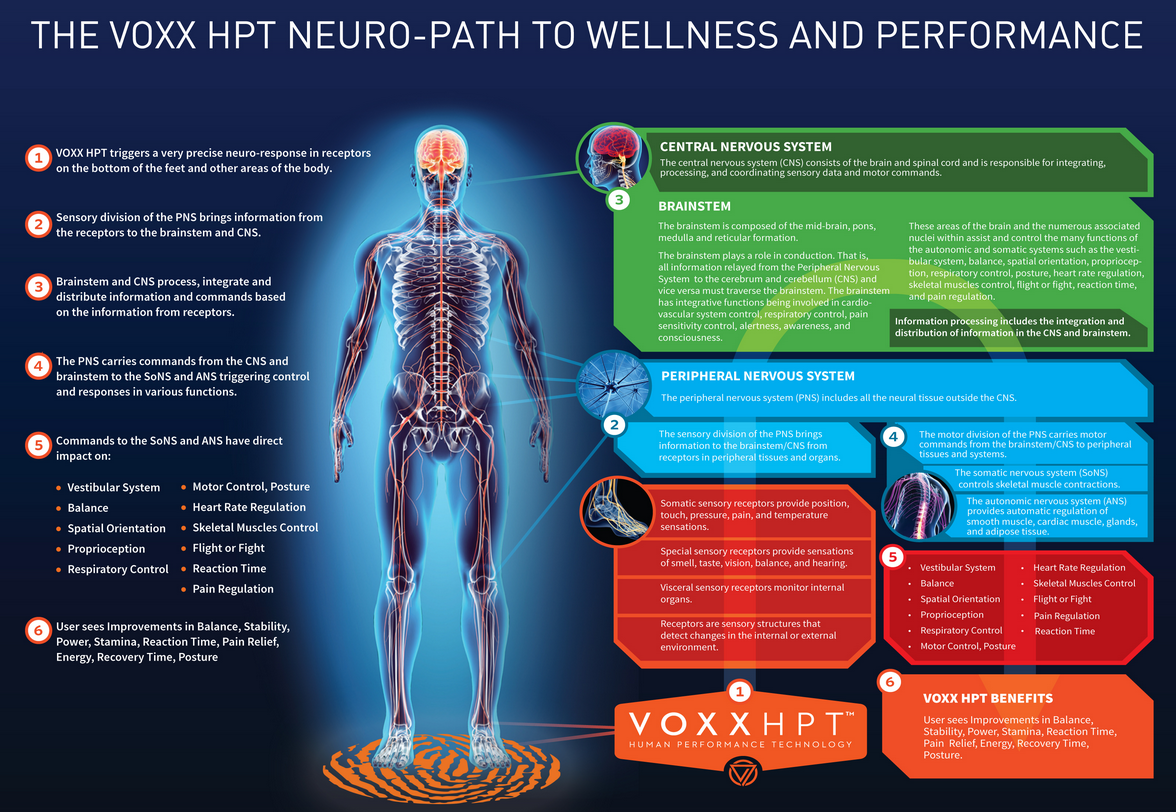 Neuroman Diagram For HPT Image